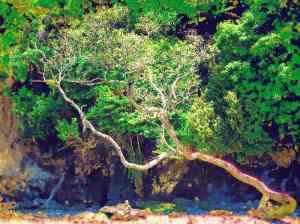 titirangi-tree-watercolour