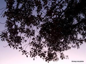 Lace Sky