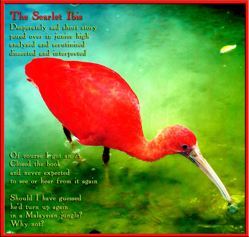 a review of james hursts short story the scarlet ibis Before reading the scarlet ibis short story by james hurst why do we hurt the ones we love 426 key idea cruelty can intrude on the most loving relationship, often in moments of anger or disappointment.
