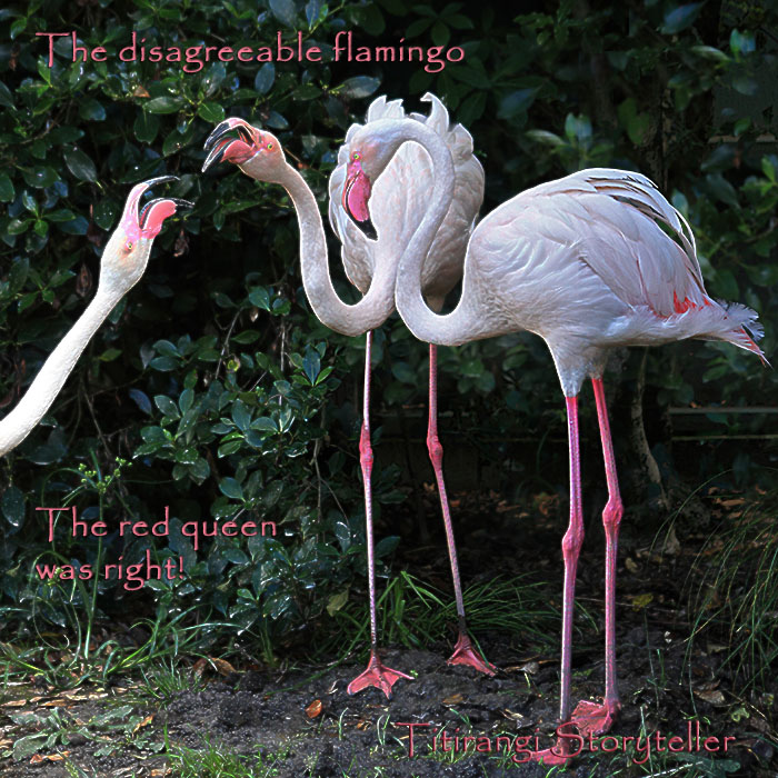 The disagreeable flamingo