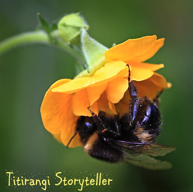 Buttercup Bee