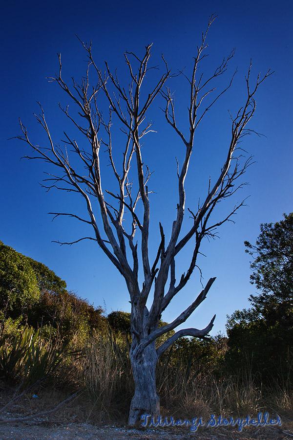 Hula tree
