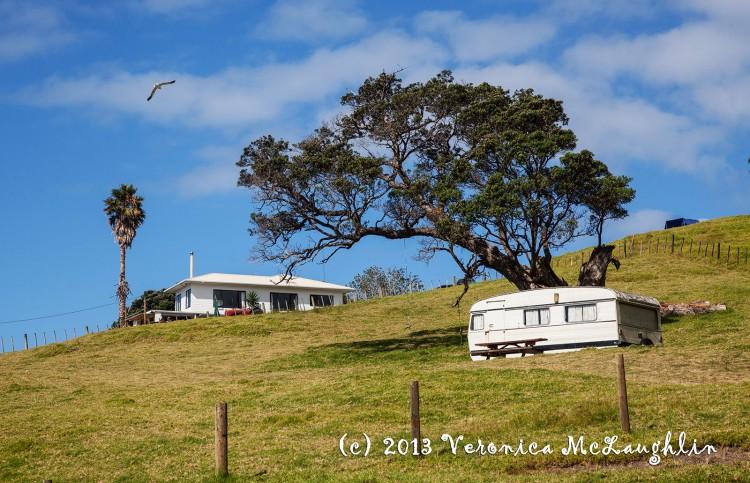 Kiwi summer