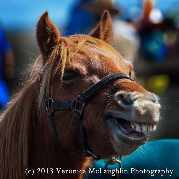 Horse-y