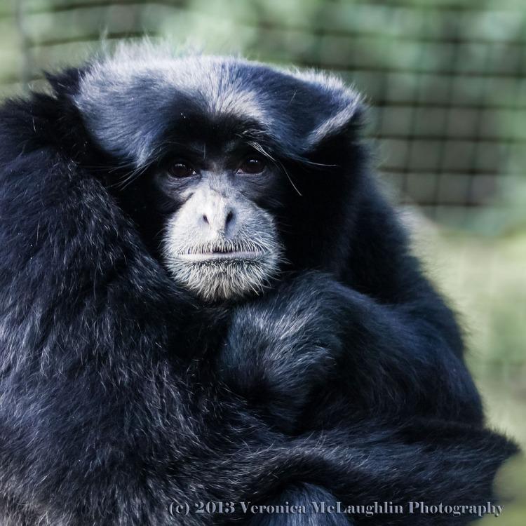 Zoo-Apr13-119