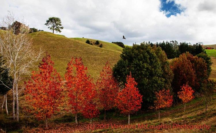 Orderly Autumn