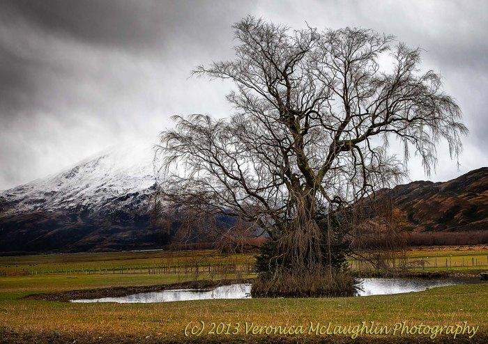 Island Tree