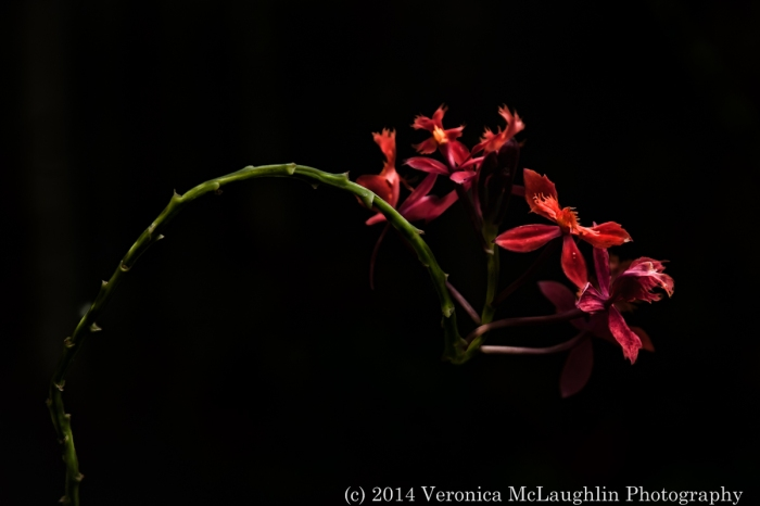 Wintergarden-fb-15