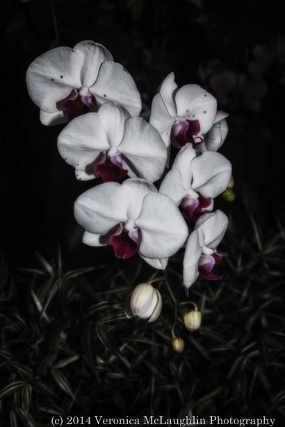 Wintergarden-fb-24
